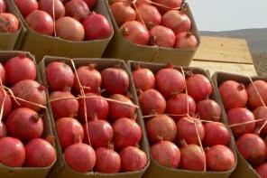 Travel: Persian Pomegranates