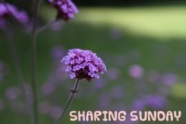 SHARINGSUNDAY7